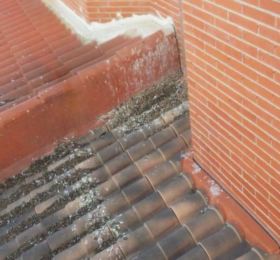 Limpieza tejados Salamanca